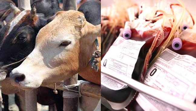 Odisha to have India's First Blood Bank for Cattle