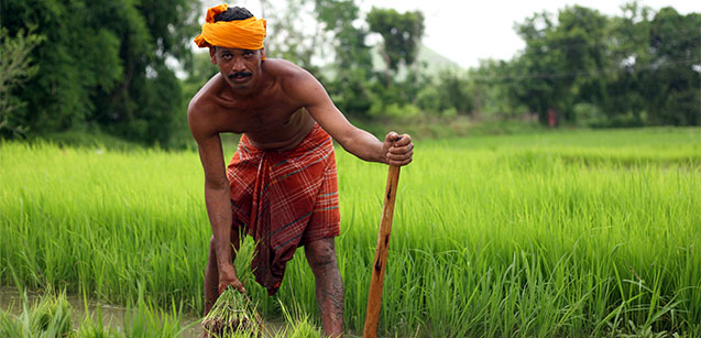 Odisha farmers can focus on adapting climate-smart crop